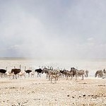 namibia_surrounds_key_03