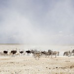 namibia_surrounds_lightbox_03