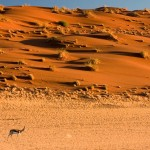 namibia_surrounds_lightbox_12